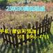 浚縣室外籬笆圍墻草坪院子庭院裝飾護欄碳化