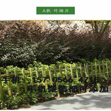 定襄县草坪护栏栅栏户外花园围栏图片