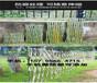 洛南县pvc庭院栅栏pvc庭院栏杆