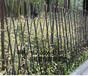 晋安区草坪护栏栅栏户外花园围栏