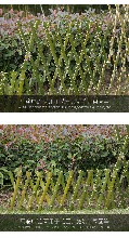 攀枝花pvc花坛护栏pvc花坛围栏满足各种需求图片