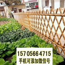 常州武进区竹篱笆插地围栏竹篱笆园艺图片