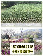 莞城区竹篱笆篱笆围栏篱笆墙竹子护栏价格批发市场图片
