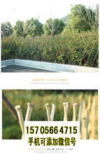 竹篱笆伸缩碳化木护栏竹片桩竹护栏竹栅栏价格定制定做图片