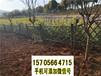 杭州下城竹籬笆pvc護欄木質圍欄-批價-市場價(中聞資訊)