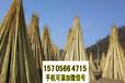 麗水景寧竹籬笆pvc護欄園藝竹圍欄市場前景(中聞資訊)
