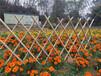 竹篱笆防腐木栅栏篱笆围挡竹护栏竹栅栏专业生产