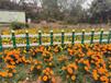 東方竹籬笆美麗鄉村護欄花園柵欄竹子護欄價格