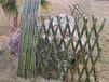 长乐竹篱笆农家小院防腐竹篱笆塑钢护栏2020年厂家供应