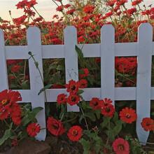 桐乡竹篱笆塑钢护栏花园篱笆竹子护栏大量现货图片