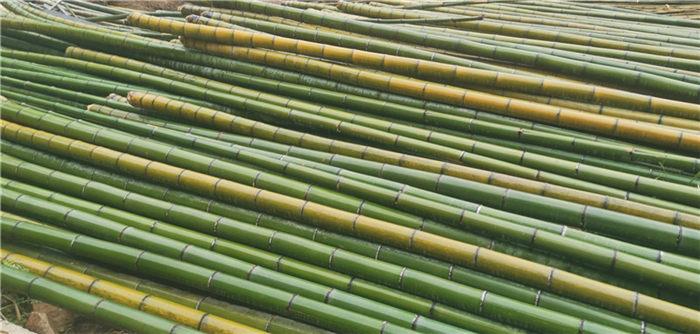 岱山 仿竹护栏竹子护栏徐优游优游真竹护栏仿竹篱笆竹子护栏