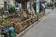 蘄春竹籬笆庭院圍欄張家口宣化竹籬笆竹子護欄庭院圍欄