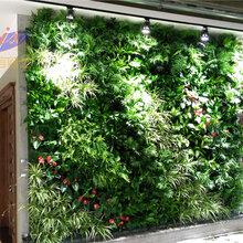 北京植物墙定做室内墙面绿化项目室内植物墙定做首选金信欧艺