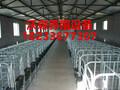 专业定制各种新型限位栏母猪定位栏猪用限位栏铸铁食槽养猪设备低价直销图片