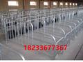 沃森养猪设备母猪限位栏猪用围栏母猪定位栏厂家批发价图片
