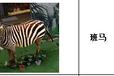 上海大克仿真动物模型1:1定制模型仿真度逼真