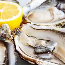 牡蛎提取物浓缩粉牡蛎浓缩粉固体饮料药食同源生产原料