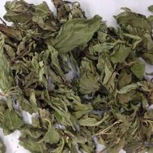 代加工薄荷提取物薄荷浓缩粉药食同源植物提取物供应商图片