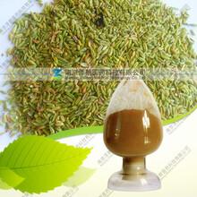 小茴香粉、小茴香浓缩粉、植物提取物图片