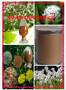 蒲公英提取物固体饮料代加工植物提取物图片