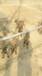 米诺犬舍主要繁育出售大小精品马犬种公保种母