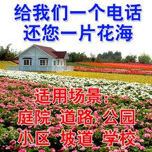 花卉种子大全_花卉种子大全价格_优质花卉种子大全批发
