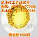 油漆黄金粉油漆专用超细进口黄金粉全国包邮