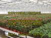供应陕西西安花卉温室大棚,遵义温室生态餐厅建设