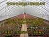 供应山西大同2000平米阳光板反季节蔬菜温室大棚建设