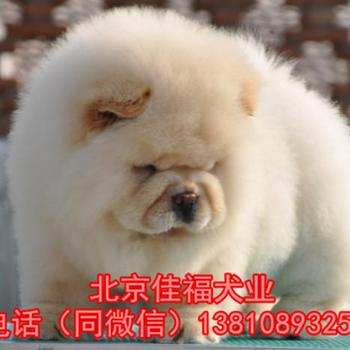 纯种松狮幼犬多少钱一只北京哪卖松狮幼犬北京家福犬舍