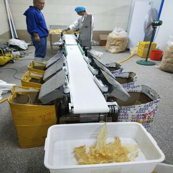 石岛海蛎子翻盘式重量分选机生蚝自动分级供应商--山东广昌