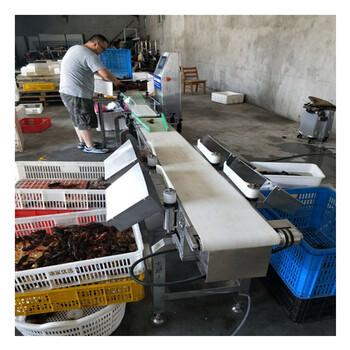 幸运快三走势图基本—山东广昌海鲜自动分选机重量分级机鲅鱼分拣设备