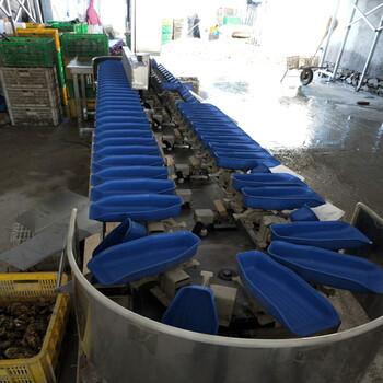 小龙虾皮带式重量分选机自动分级机重量分拣机供应商