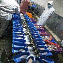 鸡爪子翻盘式自动分级机厂家--山东广昌图片
