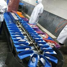 鱼类分选机价格皮带式鲈鱼自动分级厂家--山东广昌机械