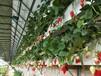 厂家直销草莓立体种植槽温室大棚种植槽量大从优