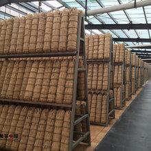 2017年安化黑茶价格,湖南黑茶,益阳黑茶图片