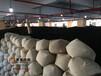 湖南一泡茶叶有限公司提供最新安化黑茶定制服务
