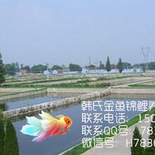 红草现在多少钱一斤?韩氏锦鲤金鱼养殖场图片