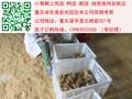 遵义习水土鸡苗批发价格习水土鸡苗养殖条件习水土鸡苗图片