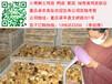 廣西桂林青腳土雞苗價格桂林土雞苗批發市場桂林雞苗價格走勢