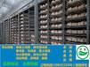 四川哪里有香鸡苗供应西充香鸡苗最近养殖价格