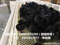 贵州哪里有优质黑鸡苗供应安顺黑鸡苗图片与供应商电话图片