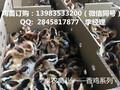 遵义地区大量供应香鸡苗,黑鸡苗,鸡苗批发厂家电话图片