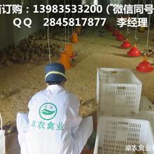 贵州安顺哪里有乌皮红羽土鸡苗乌皮土鸡苗最近报价多少