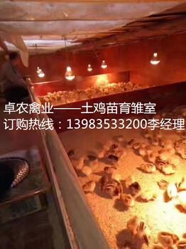 在重庆合川地区养殖青脚土鸡,市场效益好年收入翻倍
