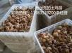 重庆南川地区养殖青脚红羽土鸡苗市场前景好