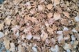 垄上养殖常年求购:玉米大豆高粱小麦麸皮豆饼次粉等饲料原料