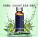 新品精装小规格橄榄饮品加工/橄榄饮品包工包料生产