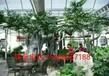 北京水泥假樹北京仿木假樹制作房山室內外假樹施工
